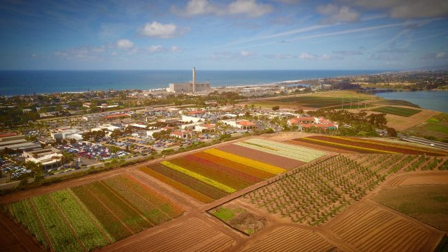 Aeril shot of the flower fields in Carlsbad