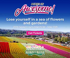 The Flower Fields At Carlsbad Ranch Is A Fifty Acre Dazzling Rainbow Of Beautiful Ranunculus Flowers Set On Hillside Overlooking Striking