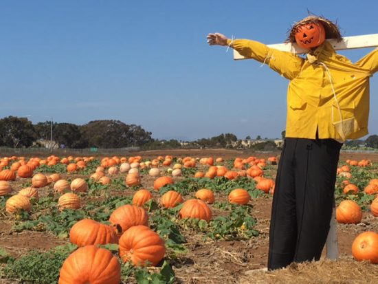 The Pumpkin Patch at Carlsbad Strawberry Company