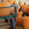 All the Gourd Times in Carlsbad this Fall