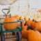 Getting Gourd and Ready for Halloween in Carlsbad